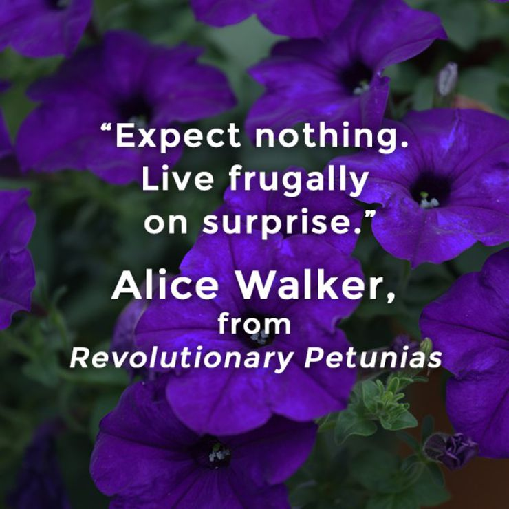 revolutionary petunias quote