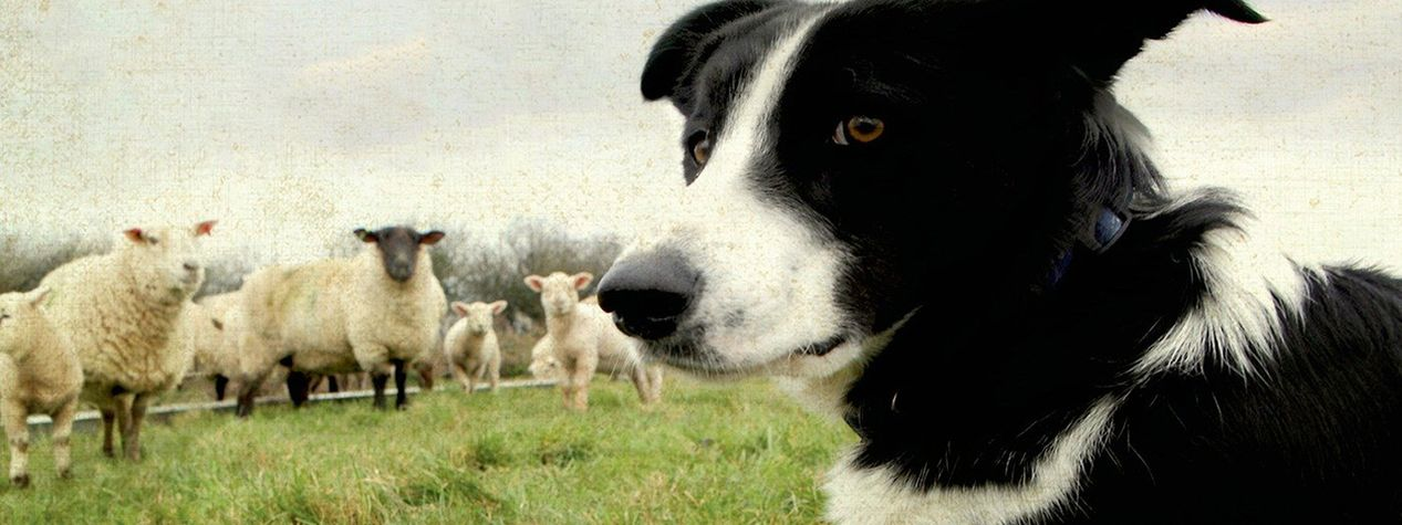 6 James Herriot Books All Animal Lovers Should Read
