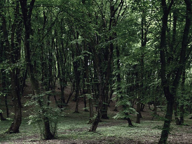 haunted forests hoia-baciu