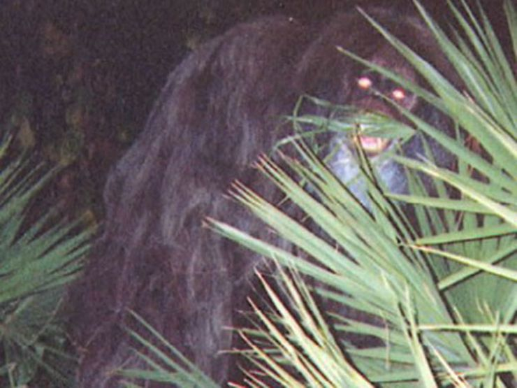 The Skunk Ape: Bigfoot's Stinky Cousin