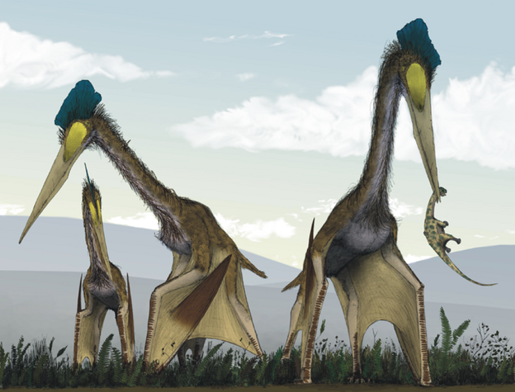are dragons real Quetzalcoatlus