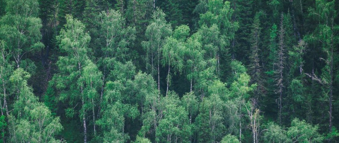 6 Things You Didn't Know About the Hidden Life of Trees