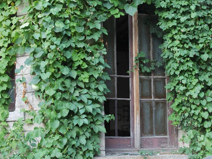 Chaonei No. 81 Ivy Door