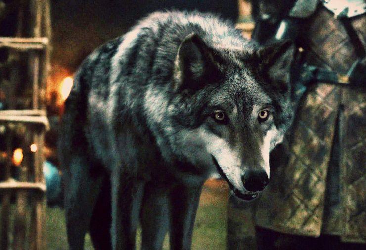 Game of Thrones Season 8 direwolves predictions