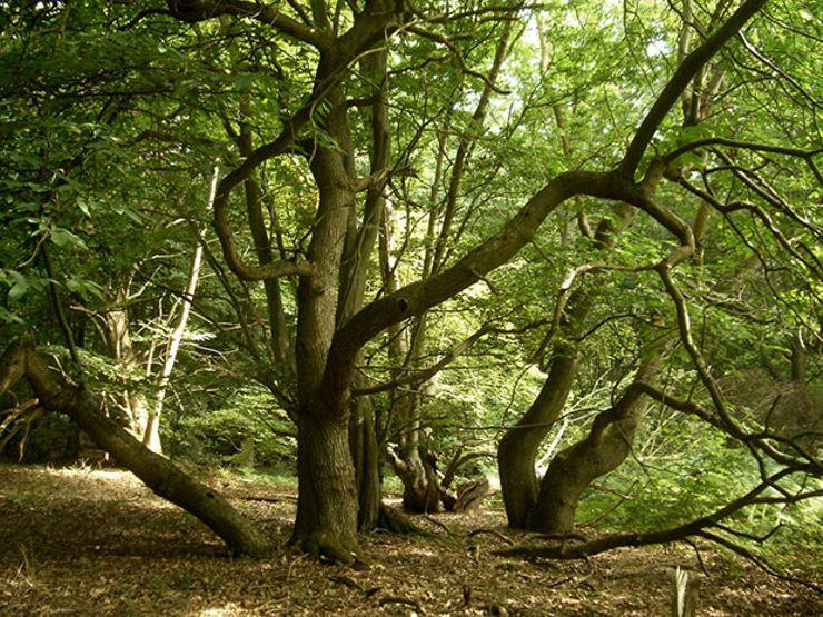 creepy natural wonders dering woods