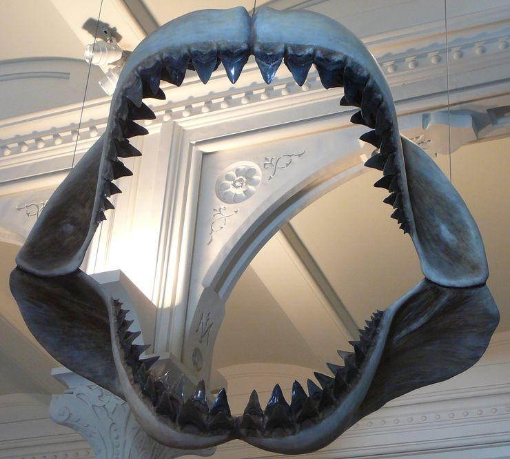 megalodon sightings megalodon jaws