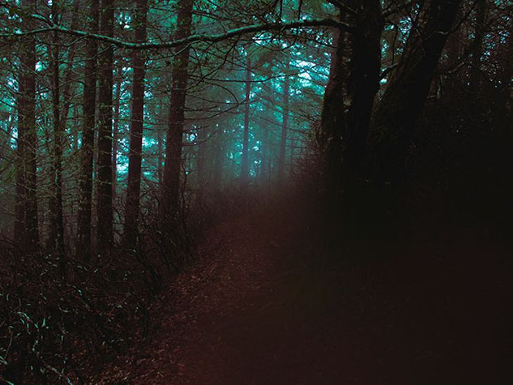 7 Haunted Forests You'd Never Want to be Alone in at Night