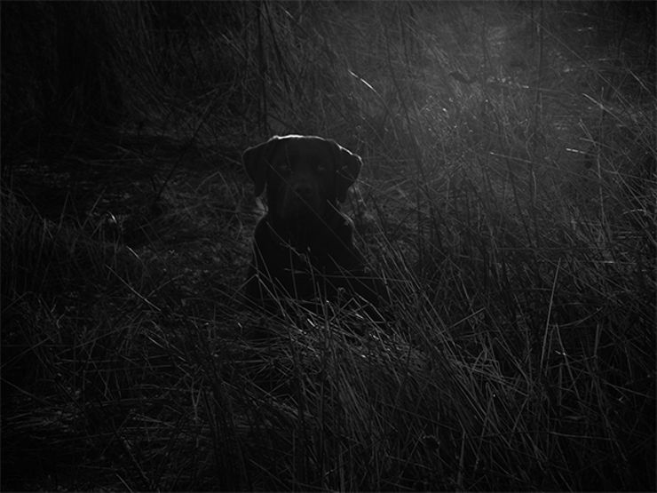 willoughby coal ghost dog