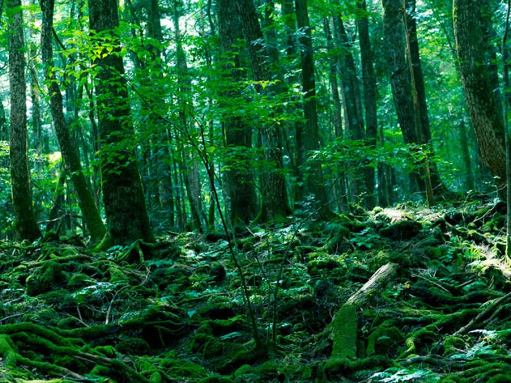 Aokigahara: Japan's Suicide Forest