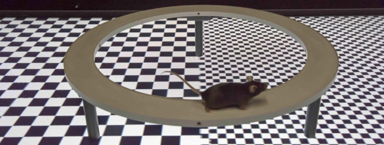Researchers Created a Working Star Trek Holodeck for Mice