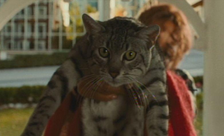 worst superhero movies ever Catwoman