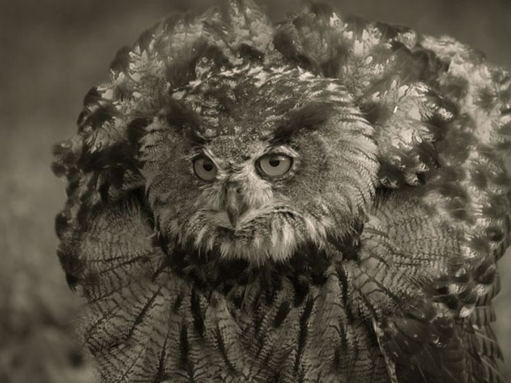 cornish owlman