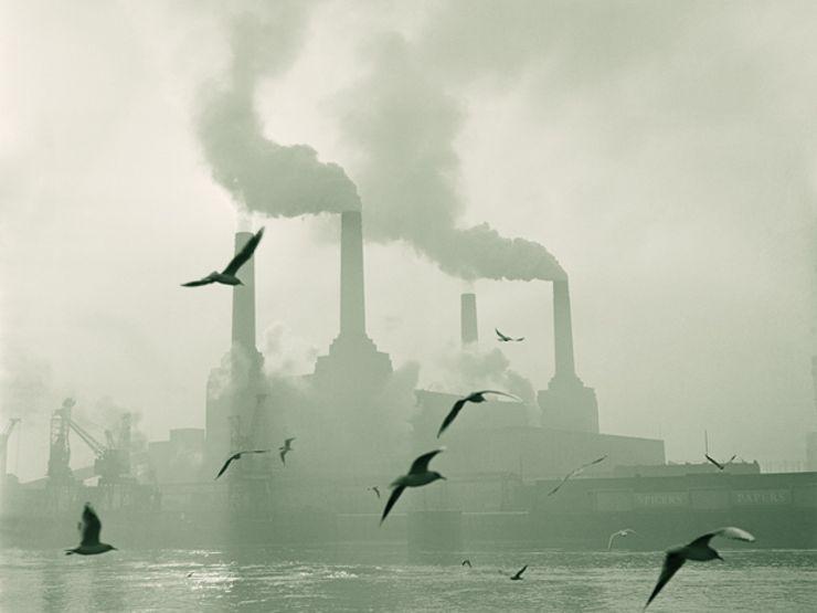factorywbirdsweb