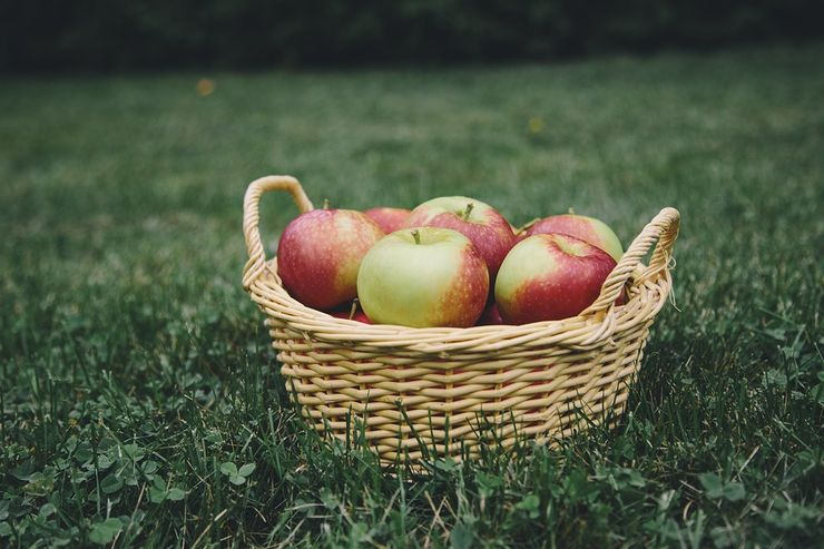 go apple picking 101 first date ideas