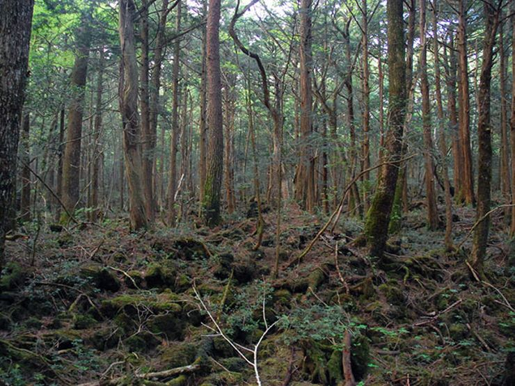 haunted forests aokigahara forest