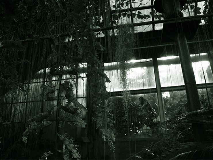 psych horror stories greenhouse