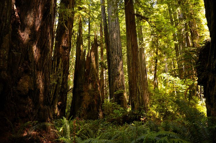 best vacation spots Redwood National Park Ewoks