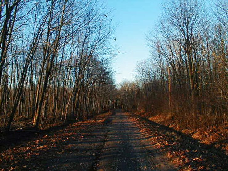 haunted roads boy scout lane