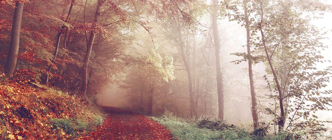 9 Imaginative Fairy Tale Retellings