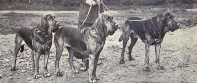 history science and ability of bloodhounds feature