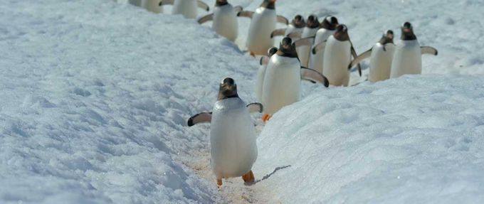 Penguins march in the snow, docuseries to stream