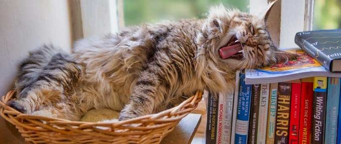 best books for cat lovers feature