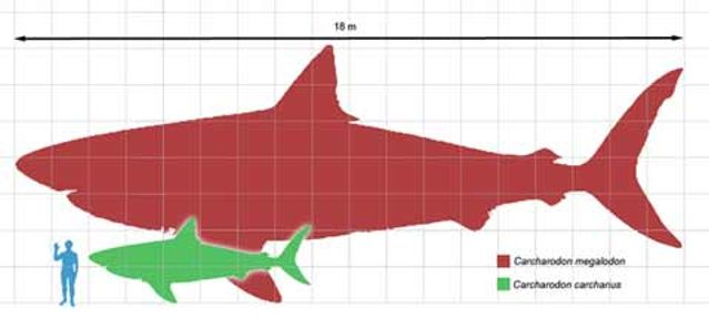Alleged Megalodon Sightings That Will Make You Want to Believe