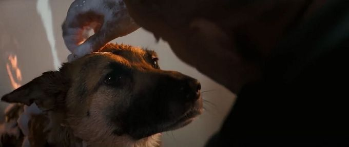 mystery and thriller movies where animals save the day feature