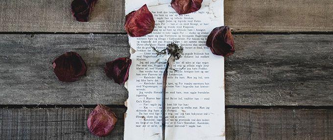 dead rose on handwritten love letter